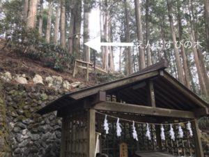 三峯神社 えんむすびの木