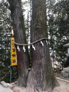 聖神社 御神木